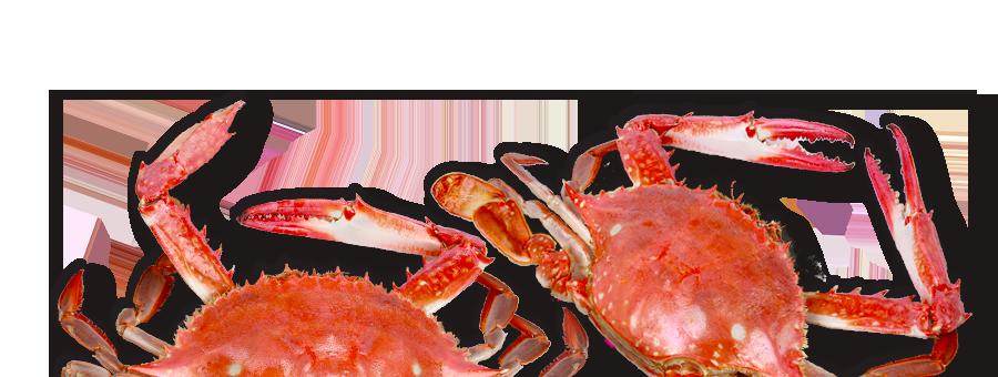 slider_crabs.png