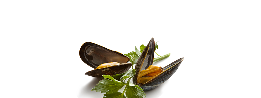 slider_mussels.png